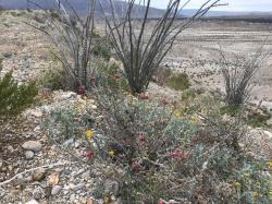 Chihuahua Desert View